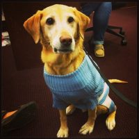 Emmie sits in a Carolina blue sweater.
