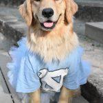 Gracie sits outside in a UNC t-shirt and Carolina blue tutu.