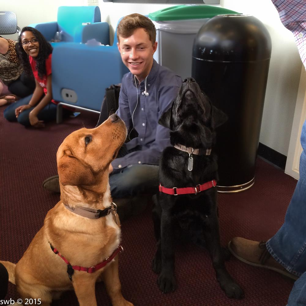 Two puppies, one brown and one black, sit and look at a person standing out of frame. Students sit behind them.