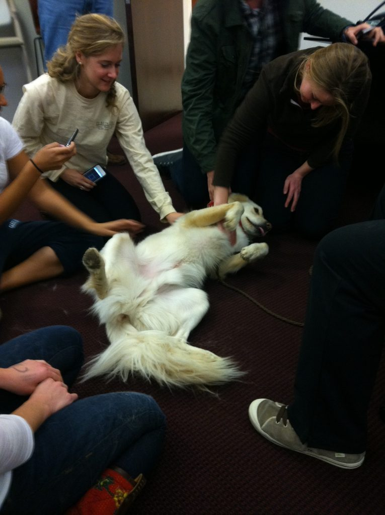 Teddy lies on his back in the middle of a group of students to get belly rubs.