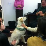 Teddy sits in the middle of an adoring group and gets petted.