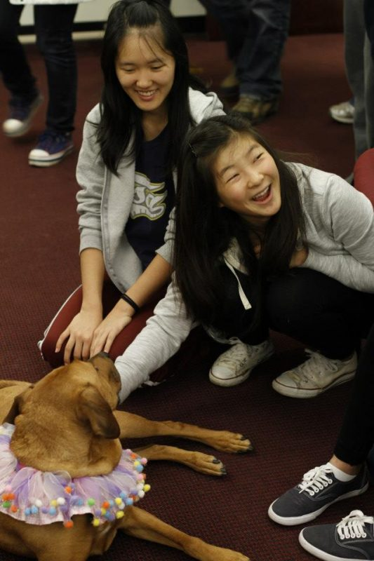Whiskey the therapy dog surrounded by students